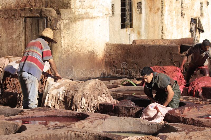 Fez, Morocco - January 01, 2010: Workers are dyeing and tanning leather at the tannery in Fez using the traditional royalty free stock photos