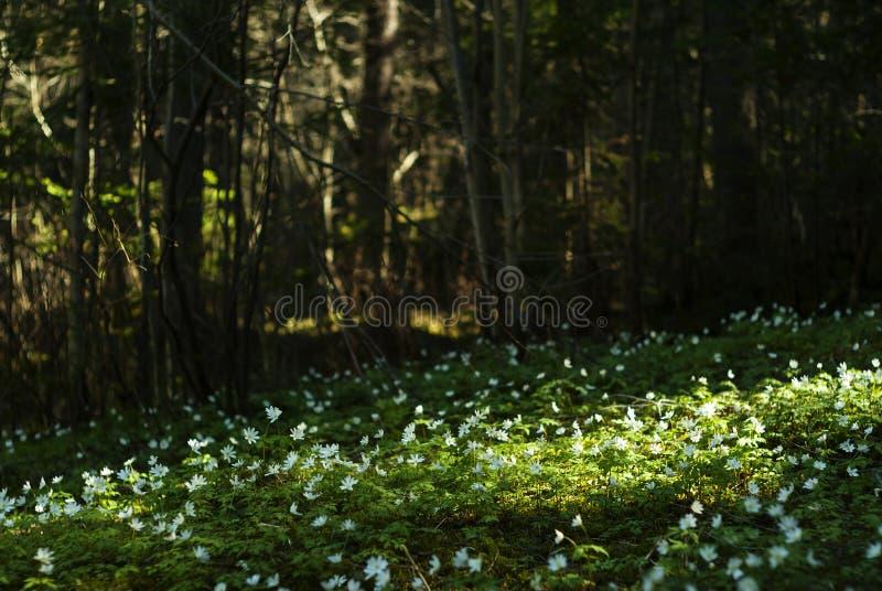 Fiaba della foresta della primavera fotografie stock