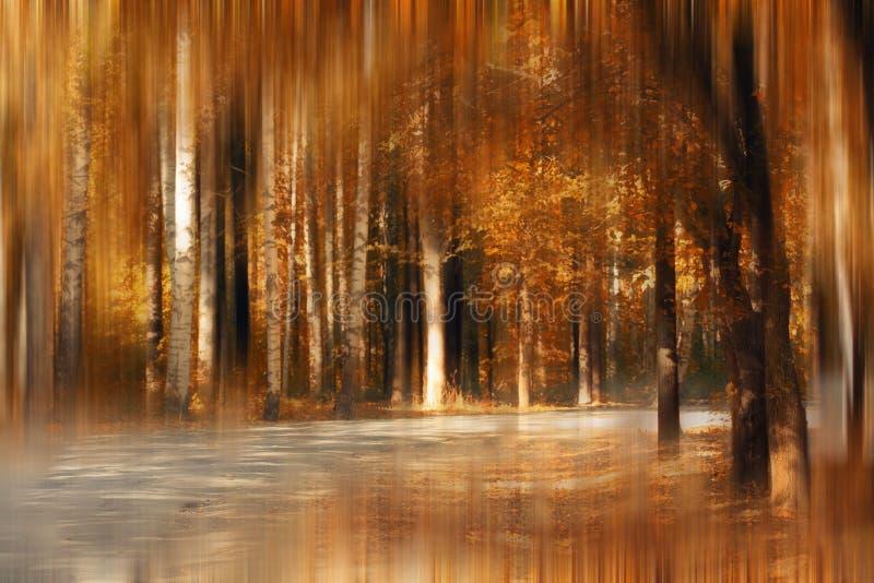 Fiaba della sfuocatura del parco di autunno fotografia stock libera da diritti