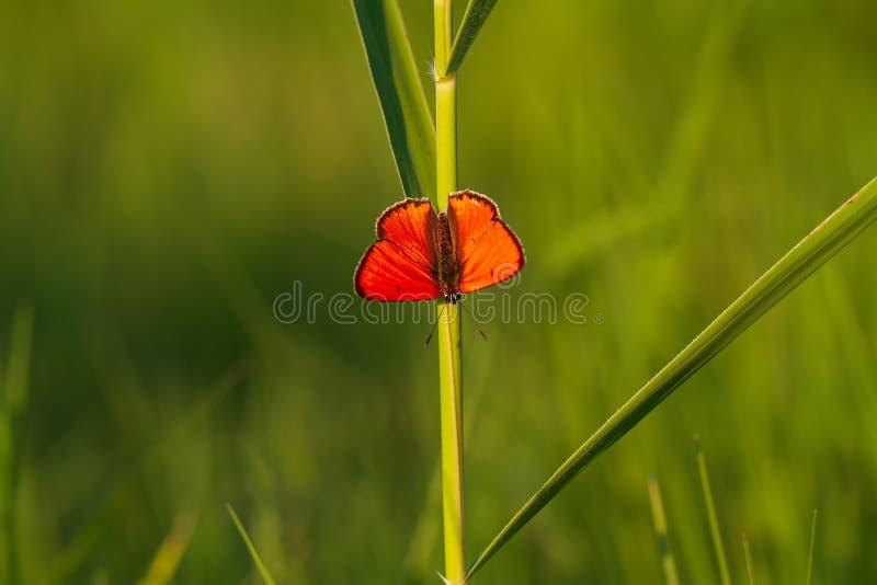 Fiaba verde con le ali arancio immagini stock libere da diritti
