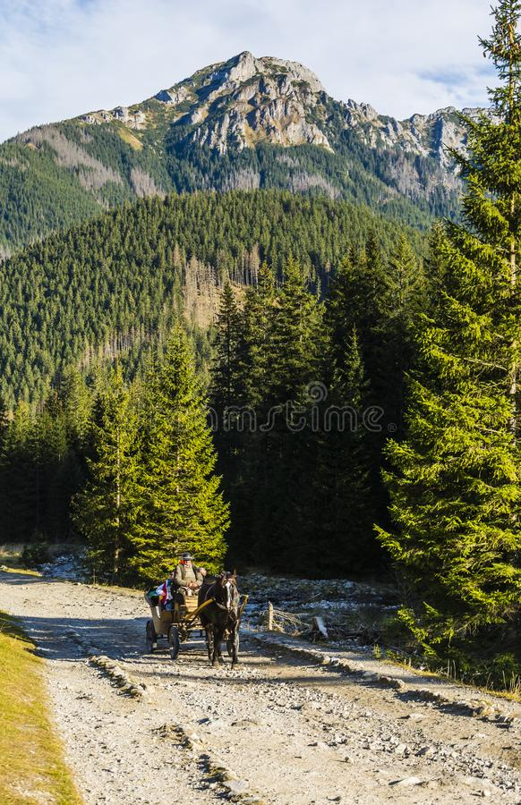 Fiacre carrying tourists by horse-drawn carriage through the Chocholowska Valley in the Tatra royalty free stock photos