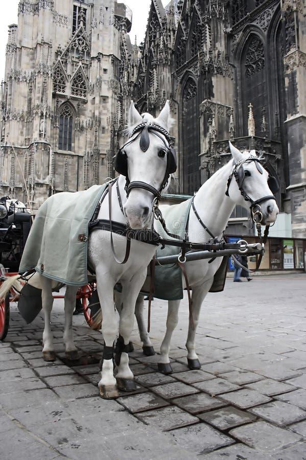 Fiaker. Traditional wedding coach (Fiaker) in Vienna Austria stock photography