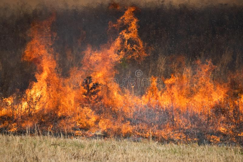 Fiamma da una bruciatura controllata fotografia stock libera da diritti