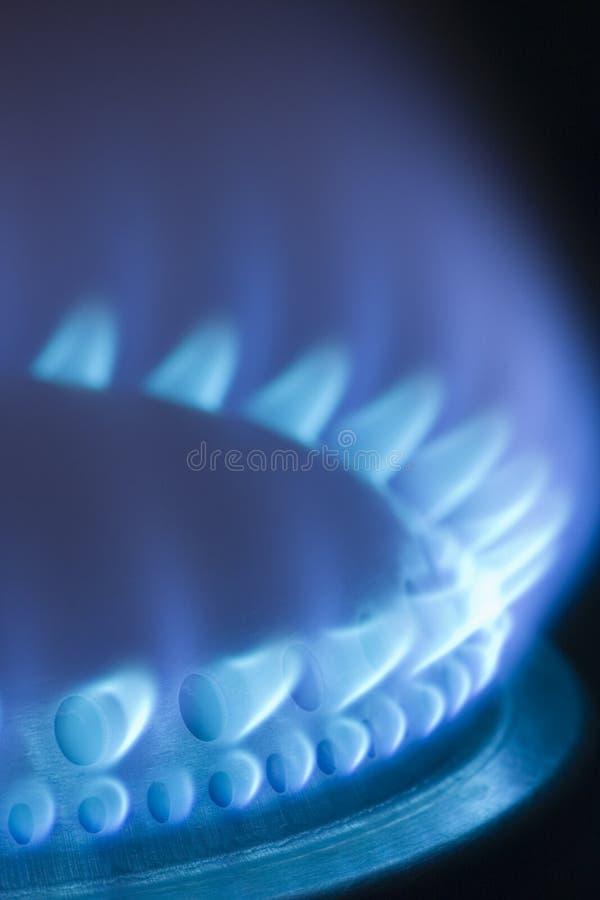 Fiamme blu della stufa di gas fotografia stock