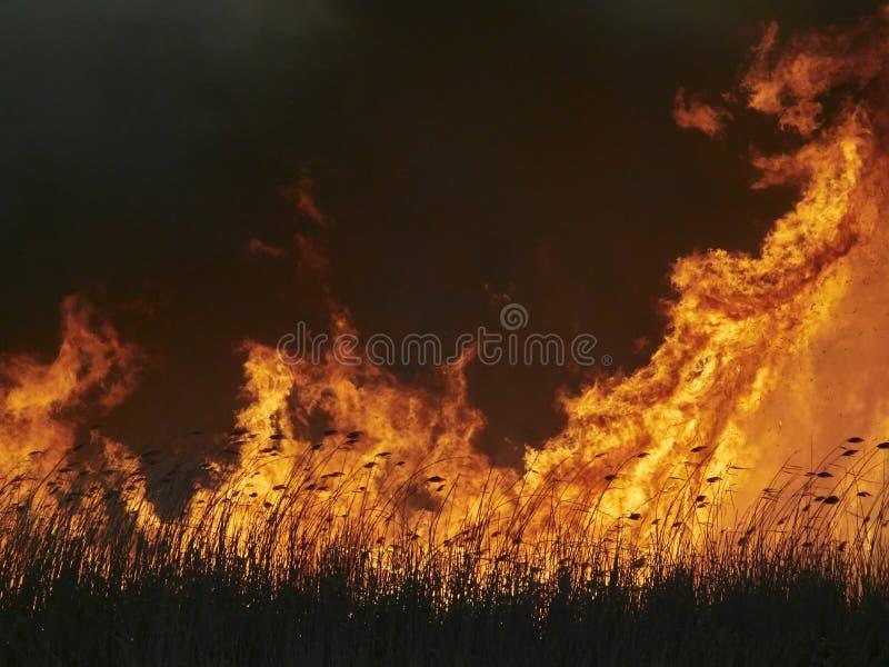 Fiamme sul campo durante il fuoco immagine stock libera da diritti
