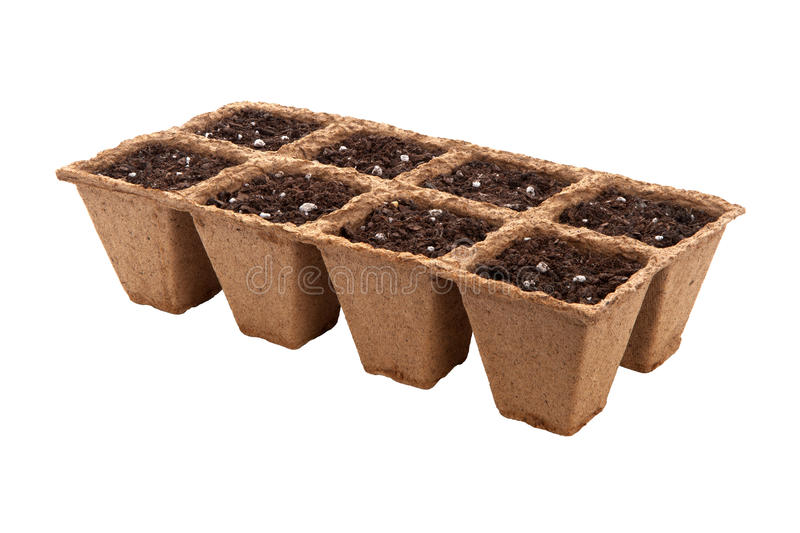 Fiber Seed Starting Cell isolated royalty free stock image