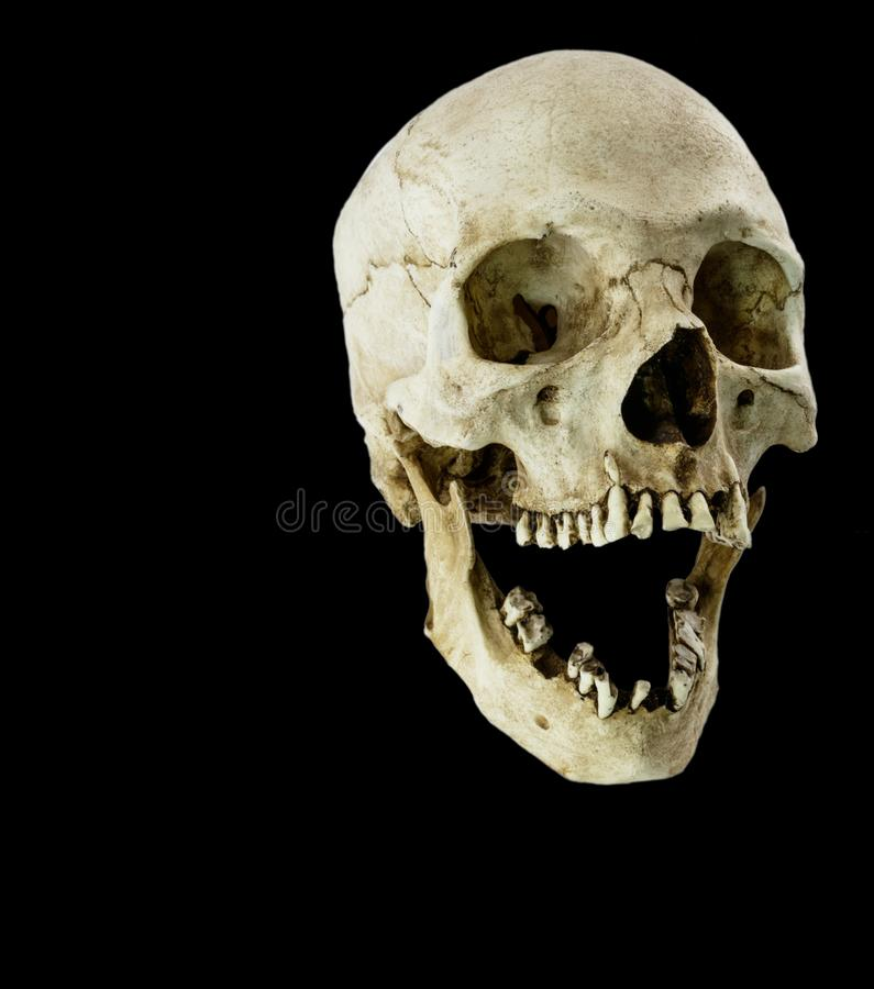 Fiberglass human skull with jaw wide open. A fiberglass human skull with its jaw wide open at 45 degree angle royalty free stock images