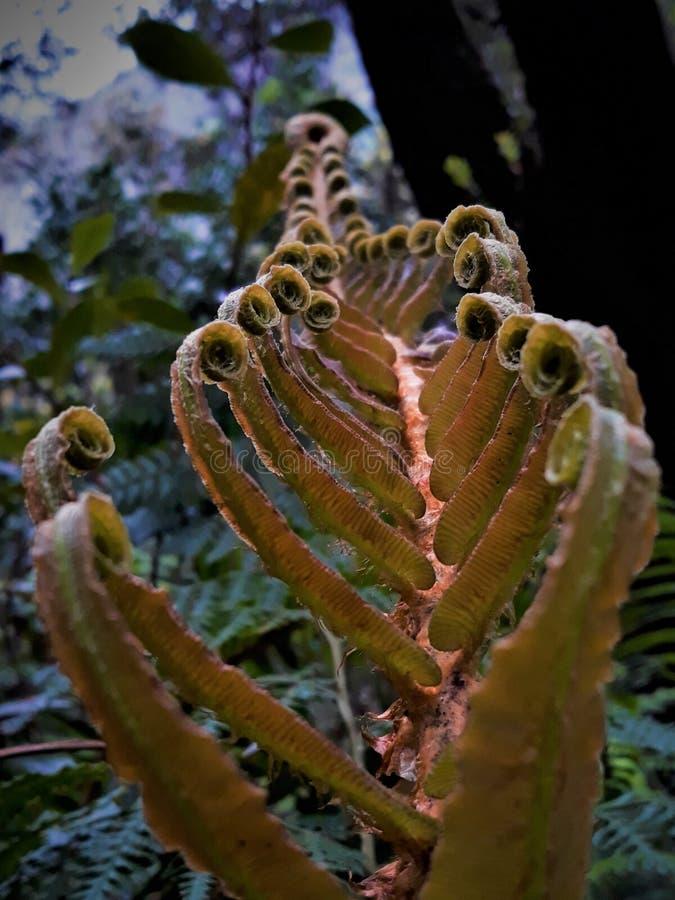 Fibonacci dorato fotografia stock