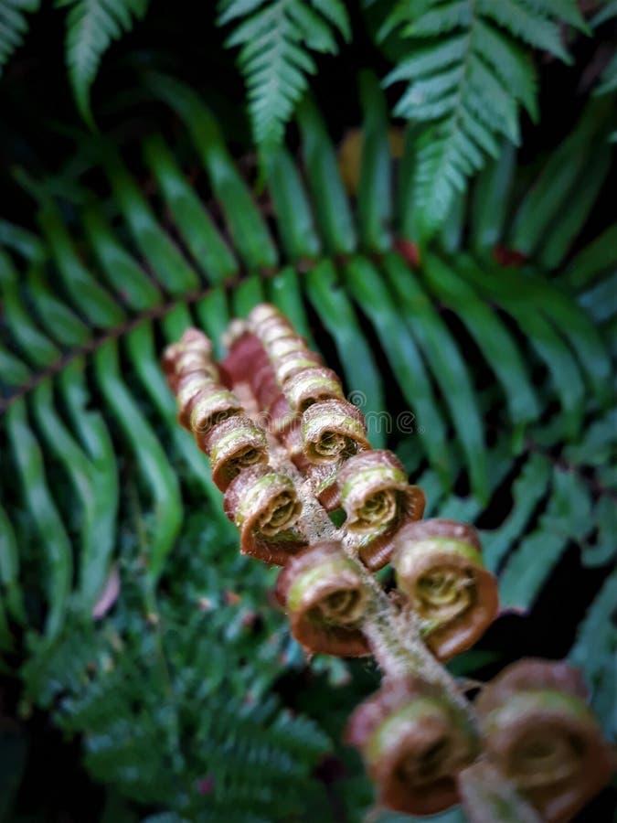 Fibonacci dourado foto de stock royalty free