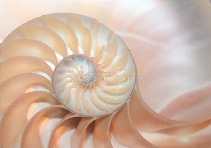Fibonacci modell i skal för tvärsnittnautilushav arkivbilder