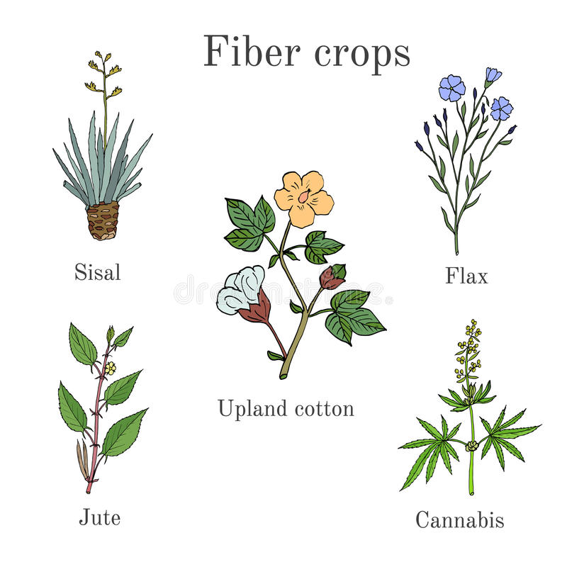 A fibra colhe - o algodão, sisal, linho, juta, cannabis ilustração do vetor