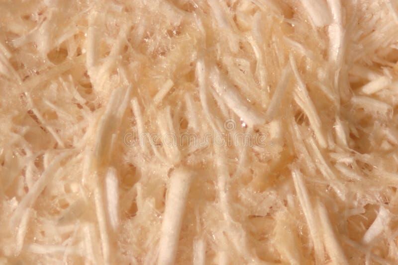 Fibra da palma de óleo, fim acima da fibra da palma de óleo sob o microscópio para a análise química no laboratório imagem de stock