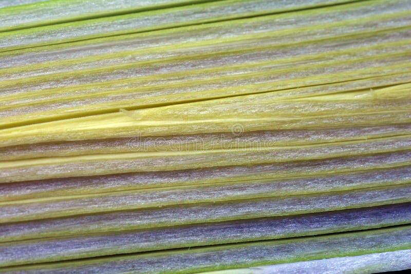 Fibra De Planta Fotografía de archivo libre de regalías
