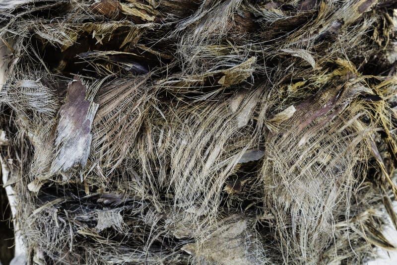 Fibra vegetal de la textura en el tronco de la palma imágenes de archivo libres de regalías