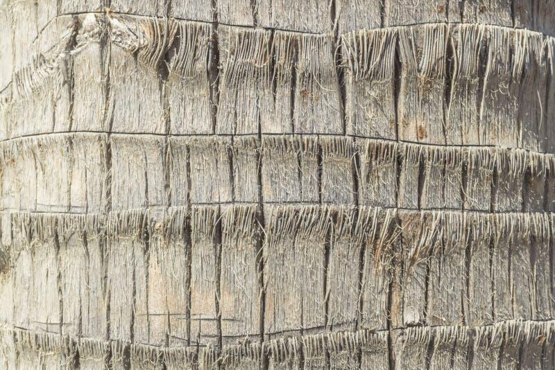 Fibras en el tronco de una palmera fotografía de archivo