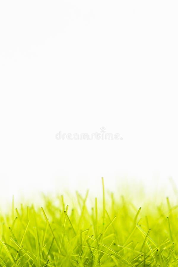Fibras verdes sintéticas que se asemejan a césped artificial con el fondo blanco imagenes de archivo