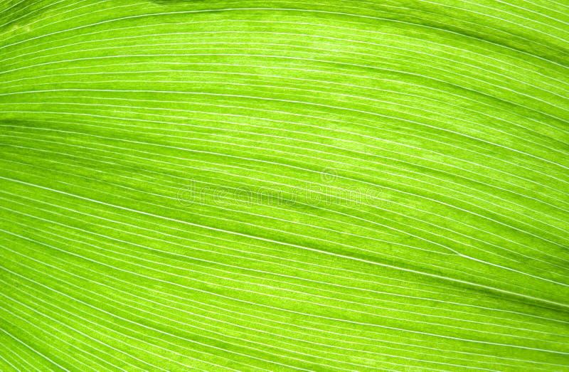 Fibres vertes de lame photos stock