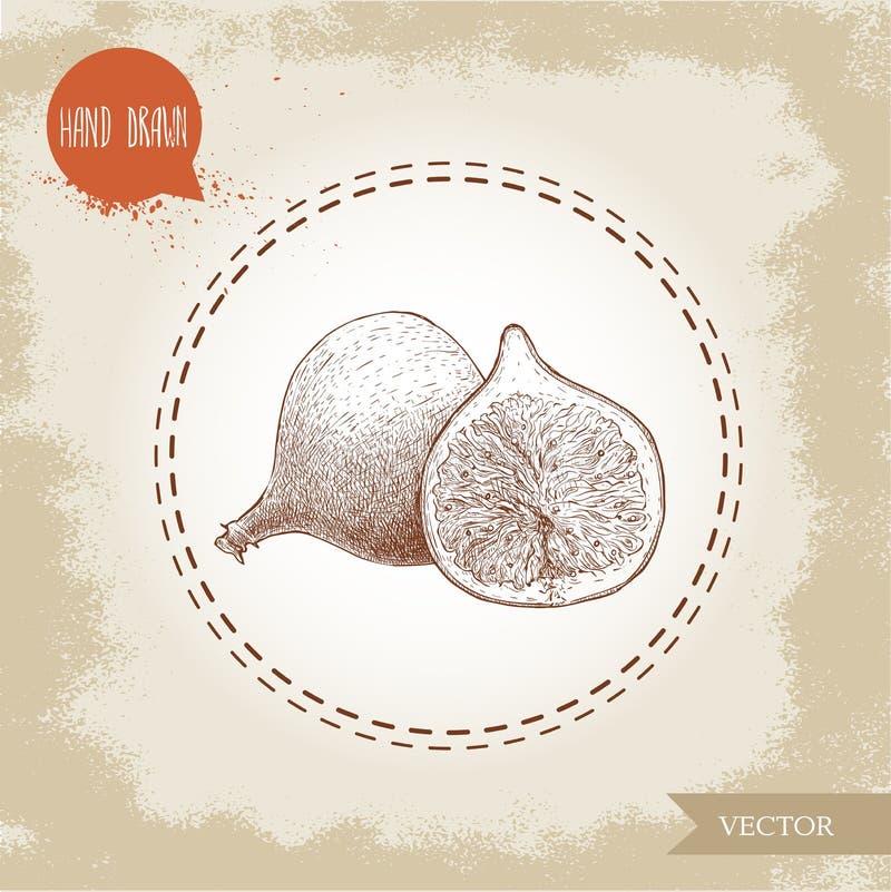 Fichi disegnati a mano di schizzo Disegno d'annata dell'alimento di eco Intera frutta e metà del vettore del fico illustrazione vettoriale