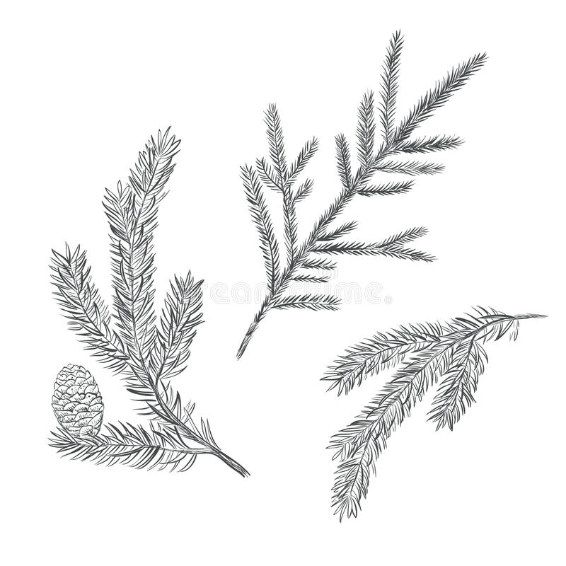 Fichtenzweigsatz Sammlung des Tannenbaums lizenzfreie stockfotos
