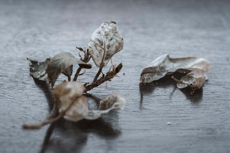 Fico indiano del mazzo su una superficie di legno fotografia stock