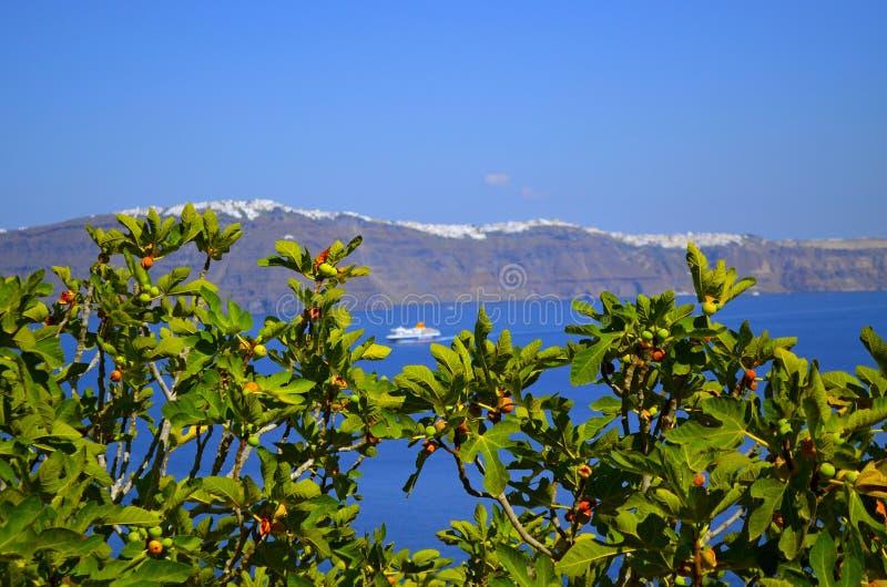 Fico in Santorini con il mare nei precedenti immagine stock libera da diritti