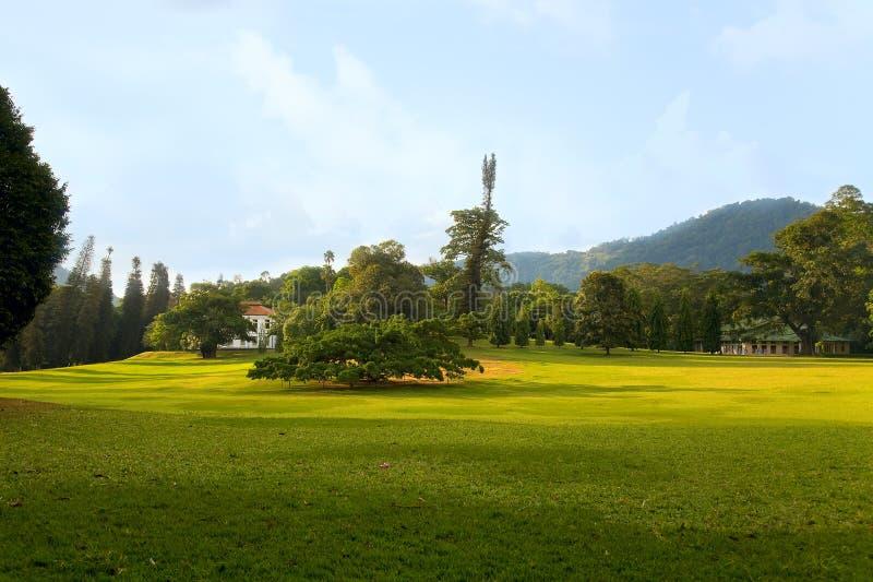 Ficus benjamina in Royal Botanical Gardens royalty free stock images