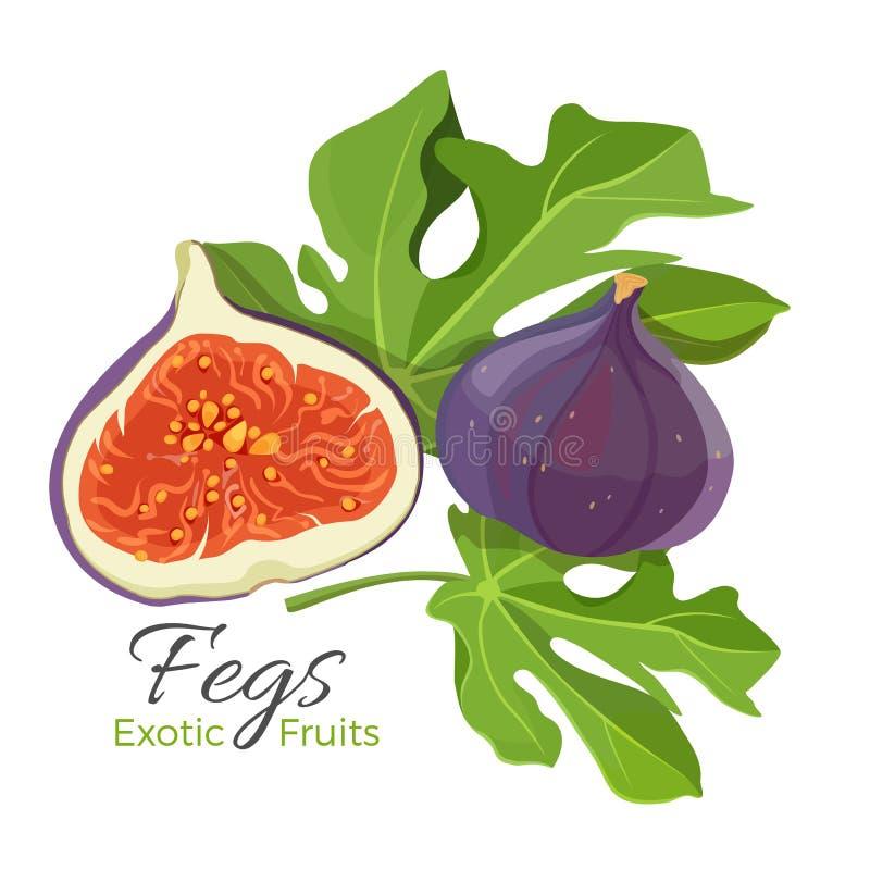 Ficus Carica figi owoc z liść wektorową ilustracją odizolowywającą ilustracja wektor