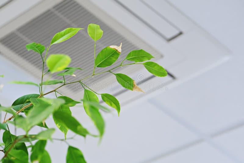 Ficus groene bladeren op de ofceiling airconditioner als achtergrond stock fotografie
