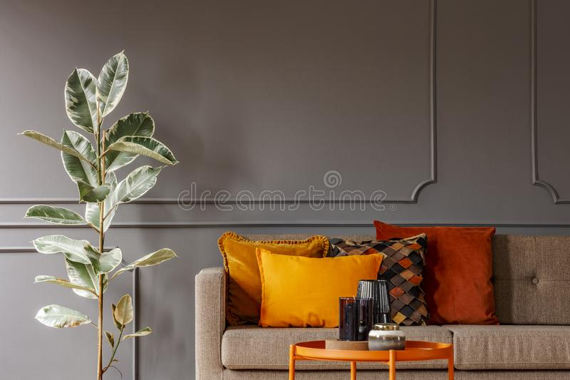 Ficus next to brown sofa with orange pillows in grey living room royalty free stock images