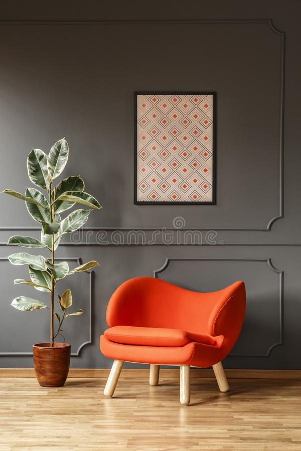 Ficus next to orange armchair against grey wall with poster in m royalty free stock photos