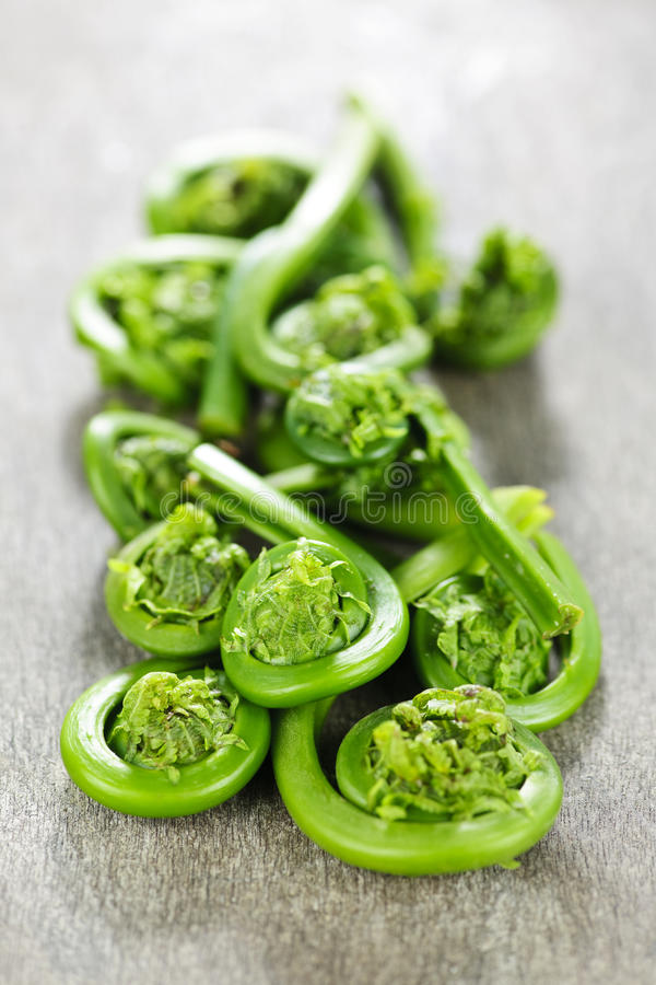 Fiddleheads stock photography