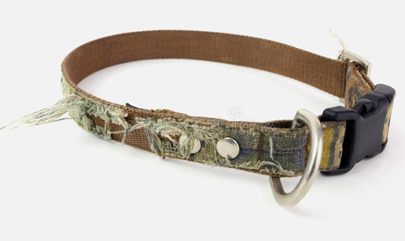 Fido Needs a New Collar. Worn and scruffy dog collar needs to be replaced. Isolated stock image