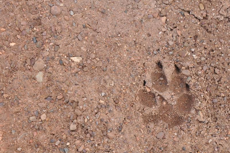 Fido Was Here. A park pathway features the imprint of a dog`s paw. Photo was taken at Arizona`s Petrified National Forest, just off historic Route 66. Evidently stock images