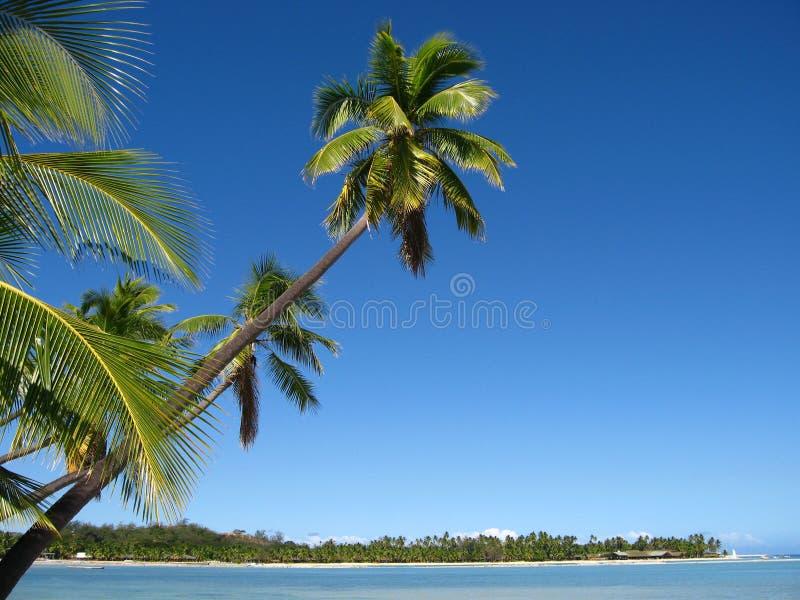 Fidschi-Schacht stockfoto