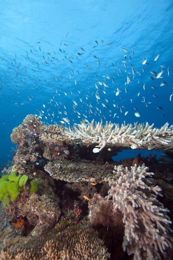 Fidschi Unterwasser stockfoto