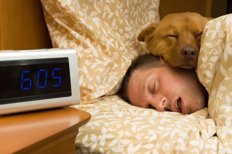 Fiel in profunden Schlaf lizenzfreie stockfotografie