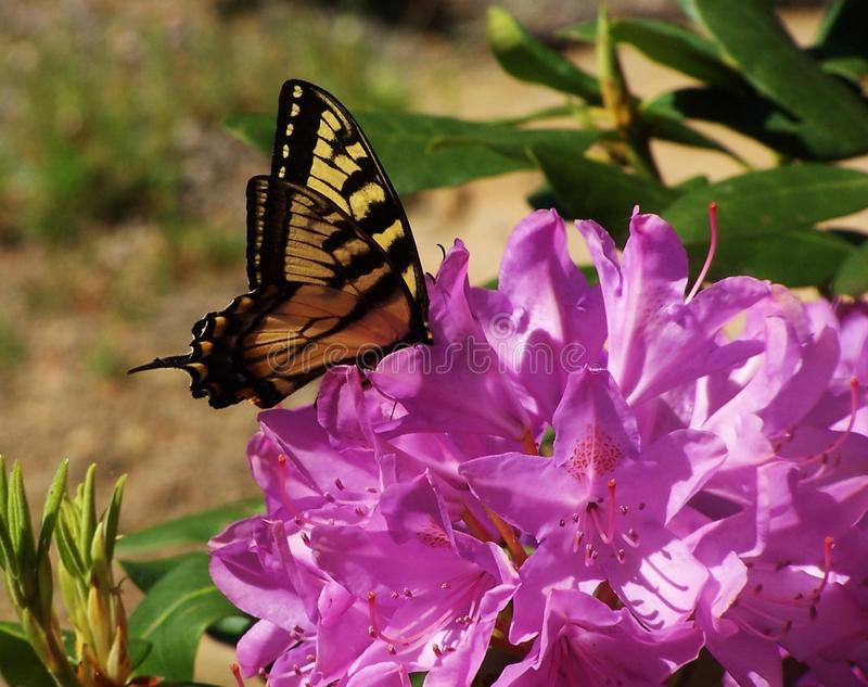 Download Field вал стоковое изображение. изображение насчитывающей бабочка - 41653007