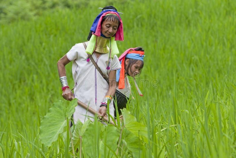 field деятельность падиа шеи karen длинняя стоковая фотография