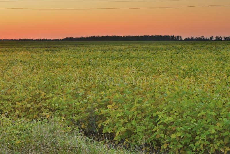 field заход солнца стоковое фото
