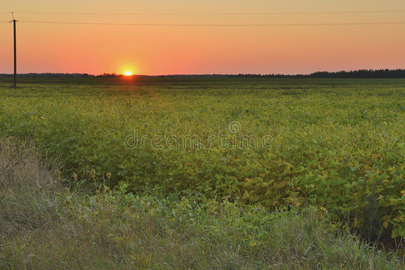 field заход солнца стоковые фотографии rf