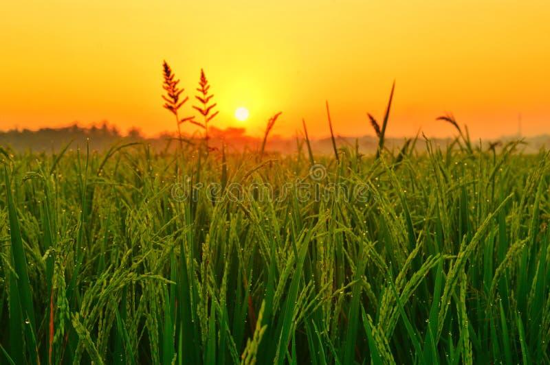 field зеленый восход солнца изображения стоковое фото
