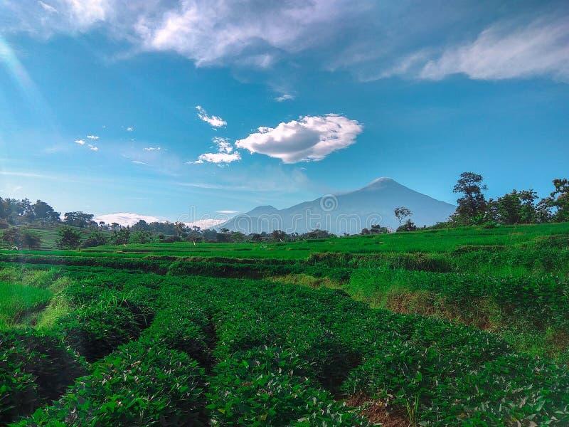 field зеленый цвет стоковые фото