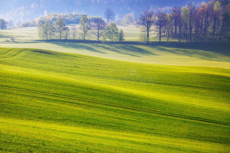 field зеленый цвет стоковая фотография