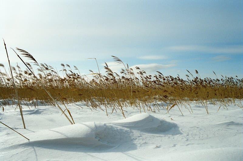 field зима стоковые фотографии rf