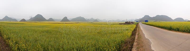 field рапс панорамы стоковые фотографии rf