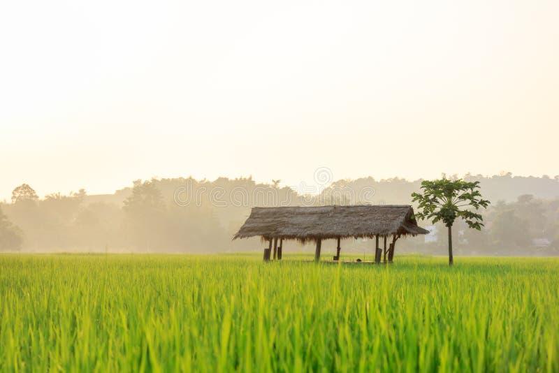 Download Field рис стоковое фото. изображение насчитывающей поле - 41659888