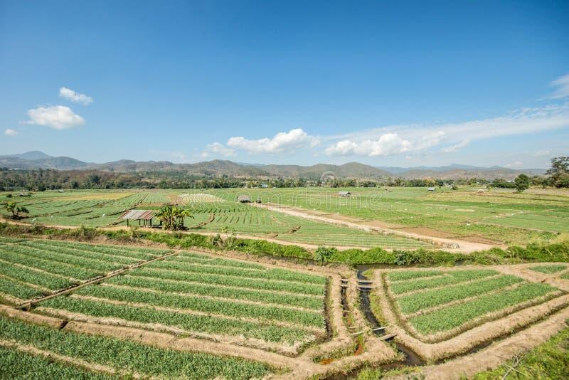field рис стоковые фото