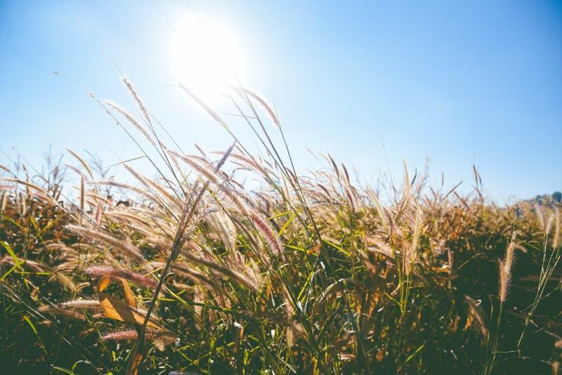 field солнце стоковое изображение rf