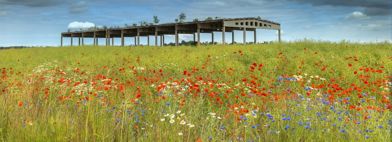 Field с blossoming цветками и покинутым зданием земледелия стоковое изображение