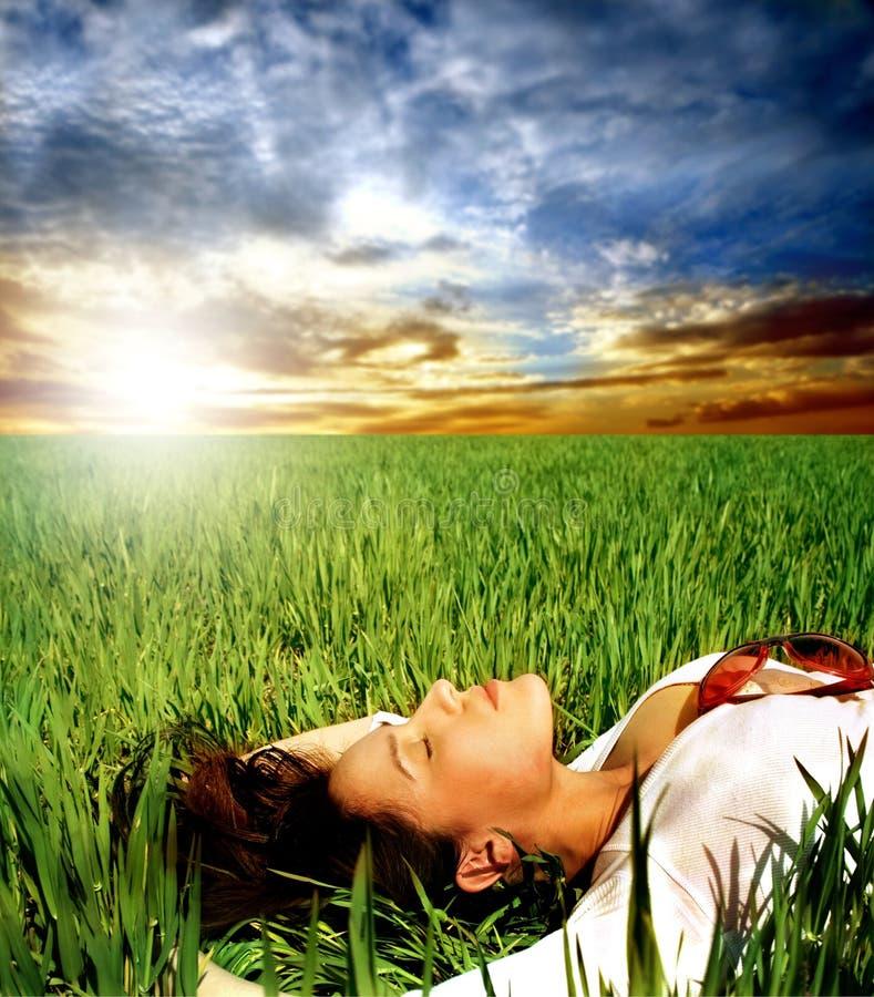 field трава стоковые фото
